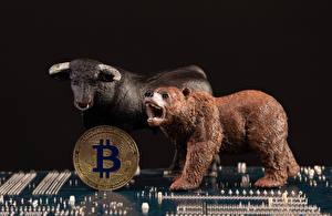 Картинки Монеты Bitcoin Медведь Быки На черном фоне