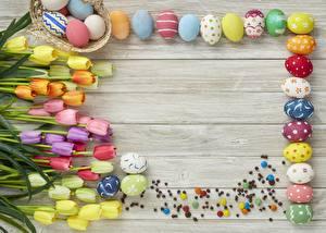 Фотография Пасха Тюльпан Шаблон поздравительной открытки Яйцами Разноцветные Доски цветок