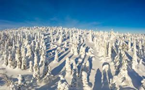 Картинка Финляндия Зима Парки Снеге Деревья Riisitunturi National park
