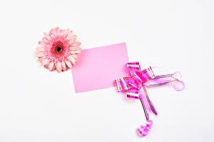 Фотография Герберы Белый фон Шаблон поздравительной открытки Лист бумаги Бантик Розовая цветок