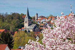 Фото Германия Здания Весенние Цветущие деревья Башни Крыша Warburg Города