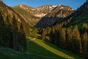 Обои Германия Горы Бавария Альп Ель Мха Природа