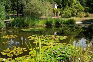 Фотография Германия Потсдам Парки Пруд Водяные лилии Кустов Park Sanssouci Природа