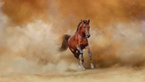 Фото Лошади Бег пыль Животные