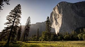Фото Парки США Йосемити Калифорния Скале Траве Деревья Природа