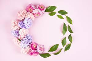 Картинка Роза Гвоздики Листва Розовый фон Цветы