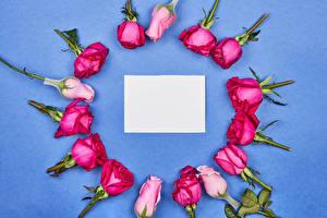 Картинки Розы Цветной фон Шаблон поздравительной открытки Лист бумаги Цветы