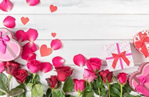 Фотографии Роза Шаблон поздравительной открытки Лепестки Доски цветок