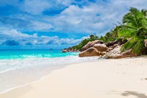 Фотография Камни Тропический Море Пляж Песок Пальм Seychelles Природа