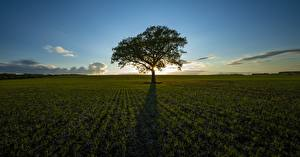 Обои Рассветы и закаты Поля Тень Дерева Траве Горизонт Природа