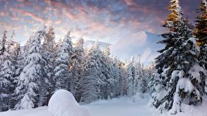 Фотографии Рассветы и закаты Зимние Лес Пейзаж Снегу Природа