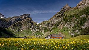 Обои Швейцария Горы Дома Луга Одуванчики Альпы Alpstein