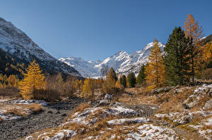 Фото Швейцария Горы Альпы Дерева Morteratsch