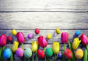 Фотография Тюльпаны Пасха Шаблон поздравительной открытки Яйцами Доски цветок