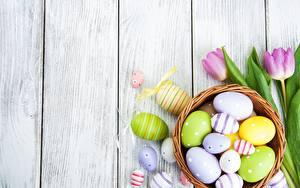 Картинка Тюльпан Пасха Доски Яйцо Шаблон поздравительной открытки цветок
