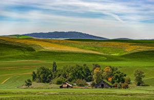 Обои США Поля Вашингтон Дерево Palouse Wheat Fields Природа