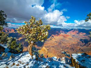 Фотографии США Парки Гранд-Каньон парк Утес Облако Деревья Снег Arizona