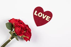 Обои для рабочего стола День всех влюблённых Букеты Роза Белом фоне Красные Сердца Слово - Надпись Английская Цветы