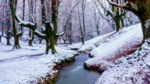 Фотографии Зимние Леса Снег Дерево Ручеек Природа