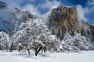 Картинка Зимние Парки Штаты Йосемити Снегу Деревьев Скала Калифорния El Capitan Природа