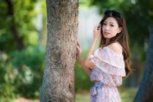 Фотографии Азиатки Боке Ствол дерева Шатенки Очки Смотрит Рука молодые женщины