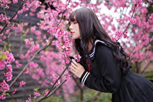 Картинка Азиаты Цветущие деревья Боке Ветки Униформе Девушки