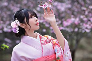 Фотография Азиатка Цветущие деревья Брюнетка Кимоно Рука Сакура Боке Девушки