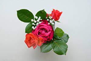 Обои Букет Роза Сером фоне
