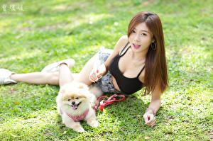 Картинки Собака Азиатки Шпиц Траве Лежачие Шатенка Шорты Девушки