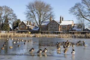 Фотографии Англия Зима Дома Пруд Утка Chiltern hills Города