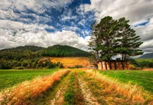 Обои Лес Небо Трава Холмы Дерева HDRI Природа