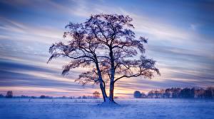 Фото Германия Зима Вечер Дерево Снег Природа