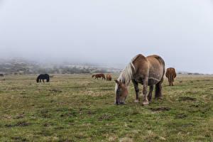 Фото Луга Лошадь