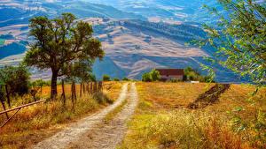Картинка Италия Дороги Дерево Campania