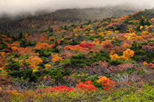 Фотография Япония Осенние Кусты Деревья Туман Zao Onsen Ski Resort Природа