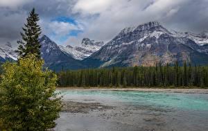 Картинка Горы Речка Парк Лес Канада Джаспер парк Alberta Природа