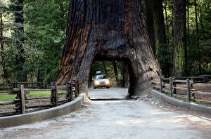 Фотографии Дороги Парк США Деревья Арка Калифорния Sierra Nevada, Sequoia National Park