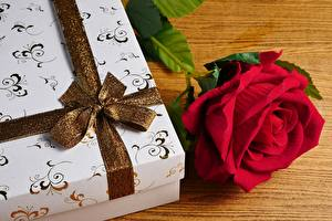 Фото Роза Коробка Подарок Лента Бантик Цветы