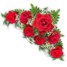 Фото Розы Ветвь Белый фон цветок