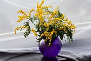 Обои Акация серебристая Боке Вазе цветок