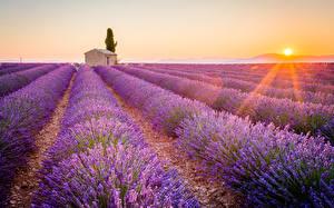 Фотографии Рассветы и закаты Поля Лаванда Прованс Франция Лучи света Горизонта Солнце