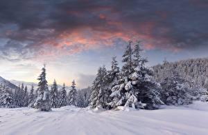 Фотография Рассветы и закаты Лес Зимние Снега Ели Природа