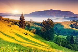 Фотографии Рассветы и закаты Пейзаж Траве Холмы Деревьев Туман