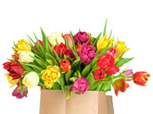 Фотографии Тюльпан Букеты Разноцветные Бумажный пакет Белом фоне цветок