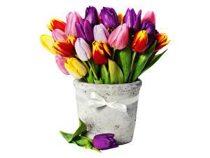 Фотографии Тюльпан Букеты Разноцветные Лента Бант Белом фоне Цветы