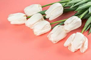 Фотографии Тюльпаны Цветной фон Белые Капля