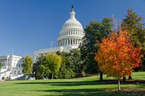 Фото США Осенние Вашингтон Дерево Трава Capitol город