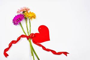 Картинка День всех влюблённых Гербера Белым фоном Три Сердца Ленточка Шаблон поздравительной открытки цветок