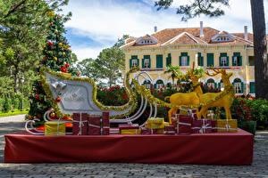 Фотография Вьетнам Парк Рождество Олени Елка Санях Подарки Park Bao Dai King Palace in Da Lat Природа