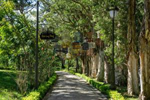 Картинка Вьетнам Парк Аллея Дерево Park Bao Dai King Palace in Da Lat Природа